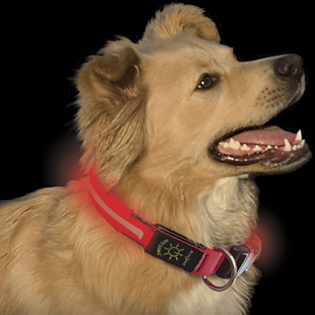 Nite Ize LED Collar and Leash